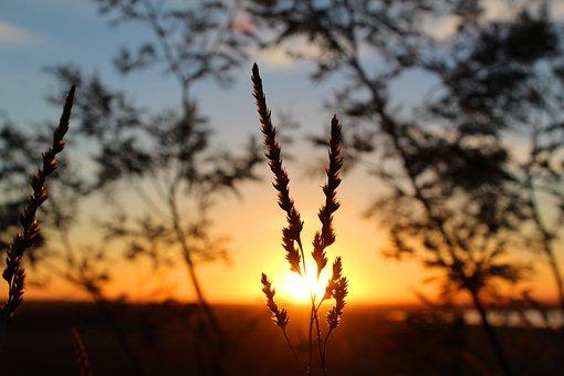 Sun, Sunset, Dusk, Sunrise, Dawn, Grass, Seed