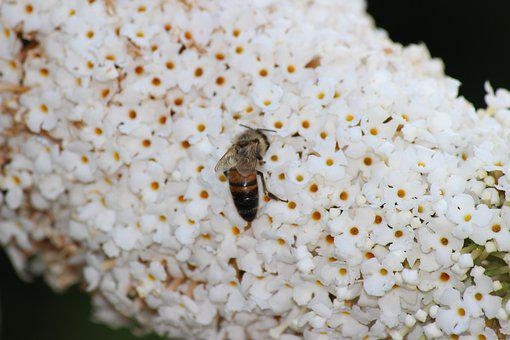 Bee, Spring, Insect, Flower