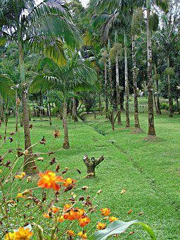 Flowers, Garden, Nature, Palm Trees