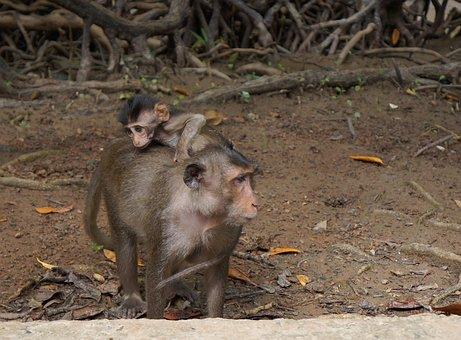 Monkey, Mother Monkey, Monkey The Need Of The Hour