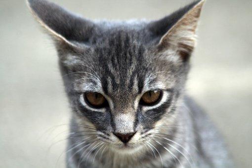 Cat, Feline, Felines, Animals, Animal, Pet, Nature