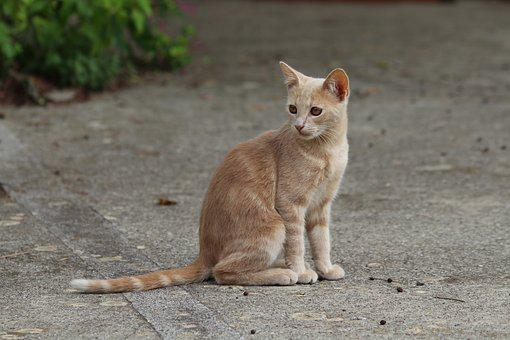 Cat, Feline, Felines, Animals, Animal, Pet