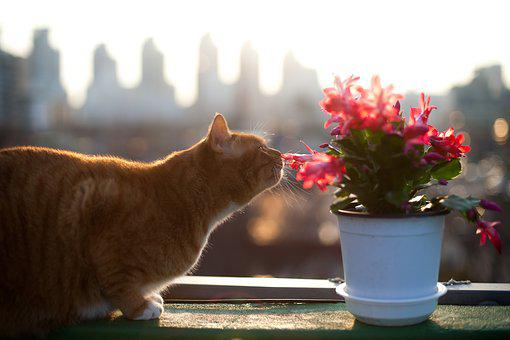 Cat, Cats, Pet, Pets, Flowers And Just, Click The Worm