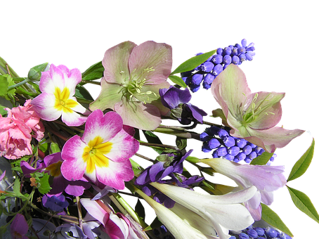 Flower, Bunch, Mixed, Spring