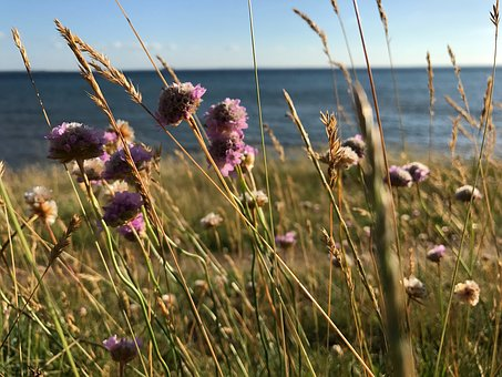 Meadows, Sea, Flowers, Summer, Coastal, Water, The City