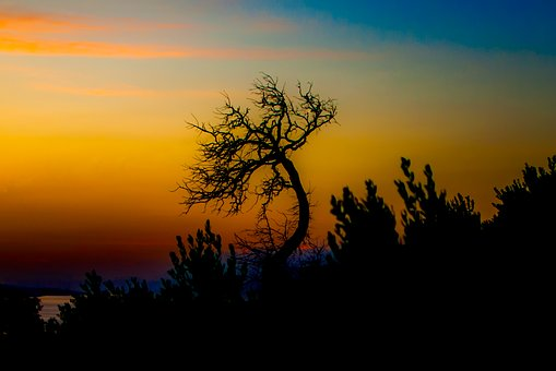 Tree, West, Sunset, Landscape, Clouds, Sky, Evening