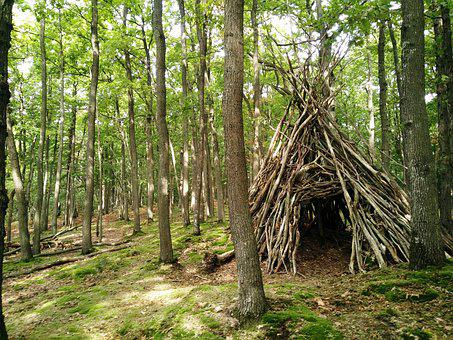 Undergrowth, Cabin, Fall