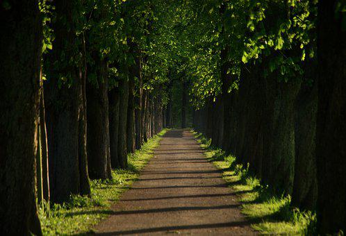 Away, Avenue, Chestnut, Walk, Tree Lined Avenue, Nature