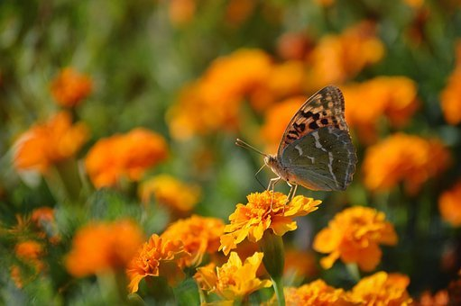 Butterfly, Flowers, Yellow, Spring, Nature, Summer