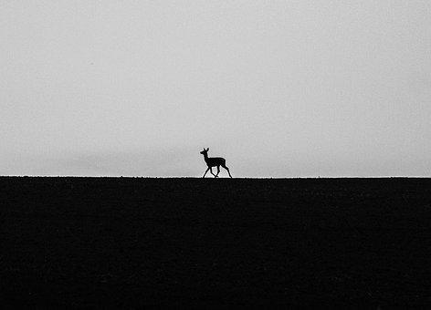 Alone, Animal, Nature, Field, Small, Black And White