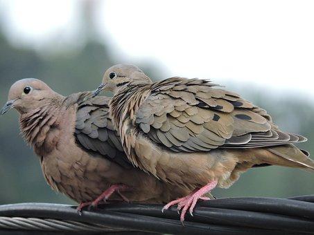 Bird, Ave, Chick, Bird Watching, Fauna, Wings, Sparrow