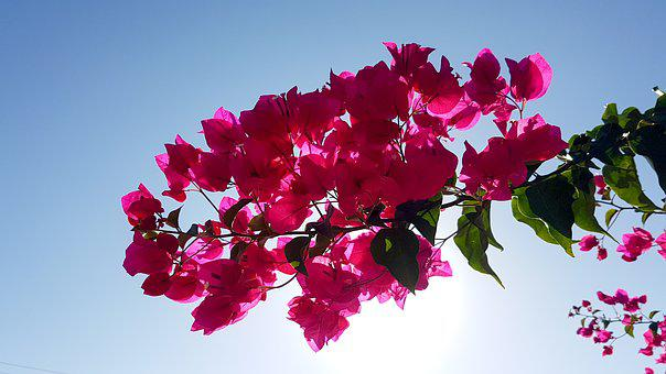 Flowers, Flower, Plant, Azalea, Flower Branch, Summer