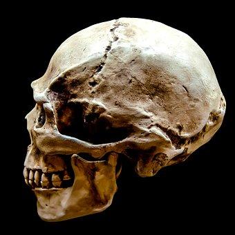 Representation, Gloomy, Body, Bone, Brain, Dark, Dead