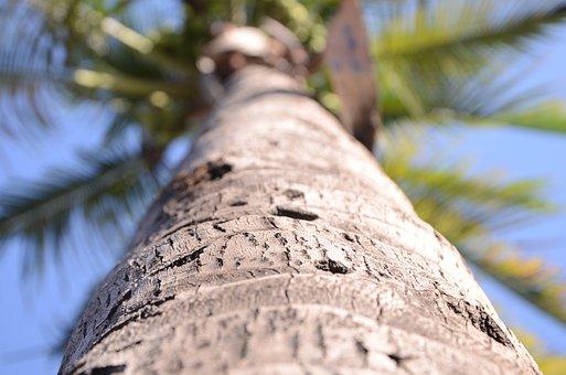 Nature, Coconut Palm, Landscape, Botanical Garden, Sky