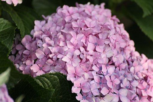 Flower, Blossom, Garden, Nature, Petals, Tree, Branch