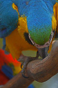 Parrot, Bird, Colorful, Animal, Plumage, Zoo, Blue, Fly