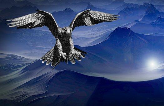 Falcon, Mountain, Dark, Night, Sky, Predator, Dangerous