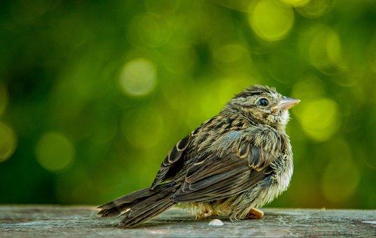 Bird, Wallpaper, Green, Nature