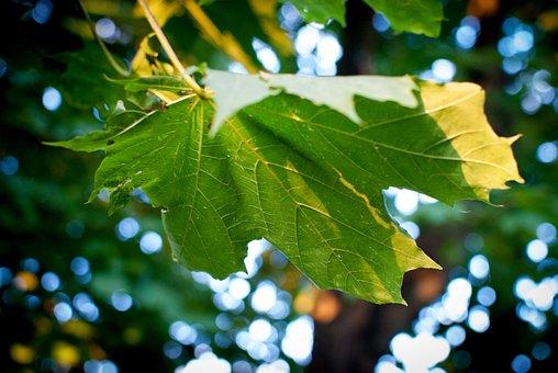 Clone, Leaf, Nature, Autumn, Foliage, Colors, Sunny