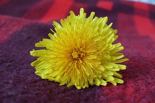 Flower, Macro, Yellow