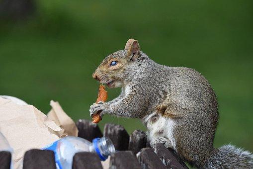 Squirrel, Nature, Animal, Park, Montréal