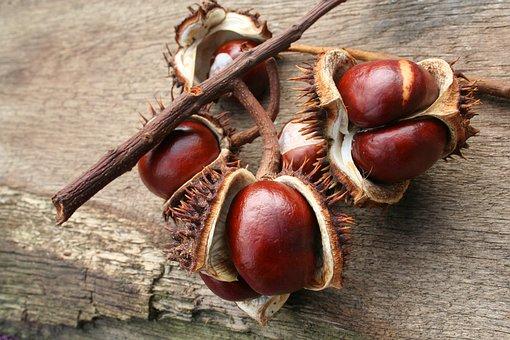 Chestnut, Autumn, Leaves, Open, Ordinary Rosskastanie