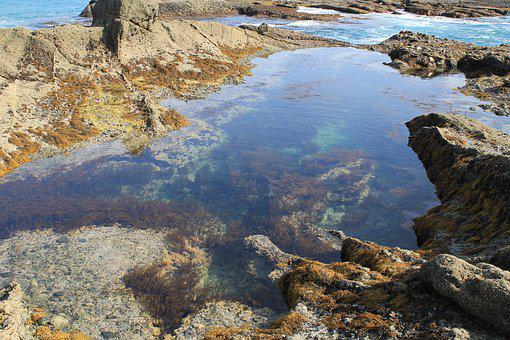 Tide Pool, Ocean, Water, Pacific, Coastal, Shore, Bay