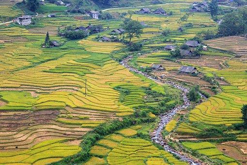 Sapa, Lao Cai, Vietnam, Landscape, Nature, Plant