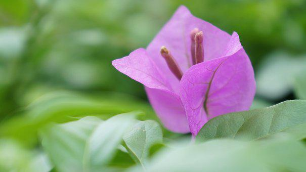 Flower, Purple, Close-up