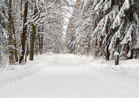 Forest, Snow, Winter, Snow Landscape, Forests, Nature