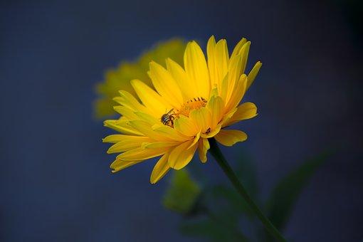 Natur, Macro, Spring, Flower, Color, Green, Summer