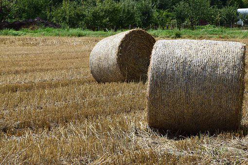 Hay, Hay Bales, Straw, Straw Bales, Autumn, Harvest
