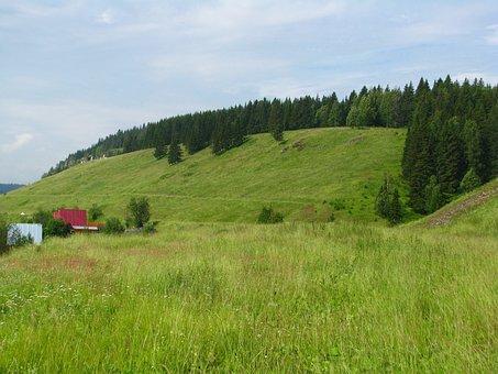 Forest, Nature, Landscape, Trees, Summer, Living Nature