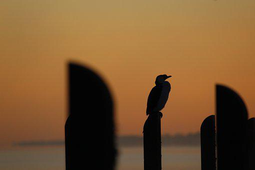 Cormorant, Jetty, Pier, Sunrise, Sunset, Dawn, Dusk