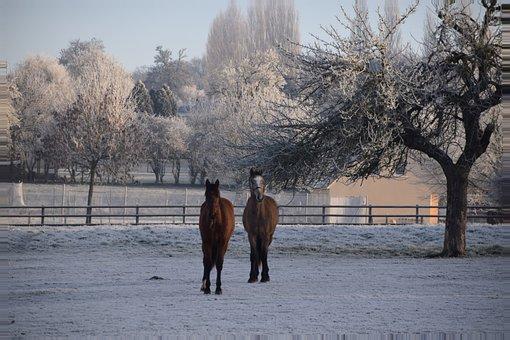 Animals, Horses, Winter, Field, Normandy