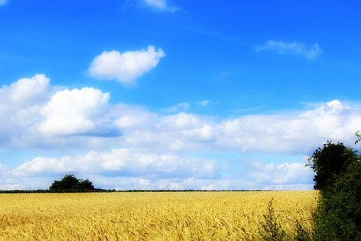Summer, Cornfield, Nature, Field, Agriculture, Sky