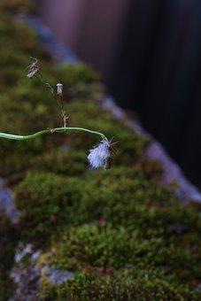 Wild Flower, Autumn, Moss, Nature