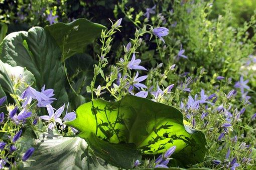 Bellflower, Flower Garden, Bell Flower Greenhouse