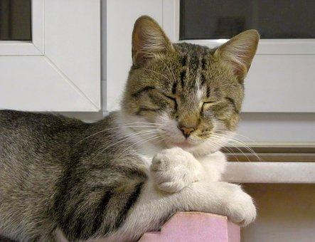 Cat, Portrait, Sleep, Calm, Animal, Pet, Face, Fur