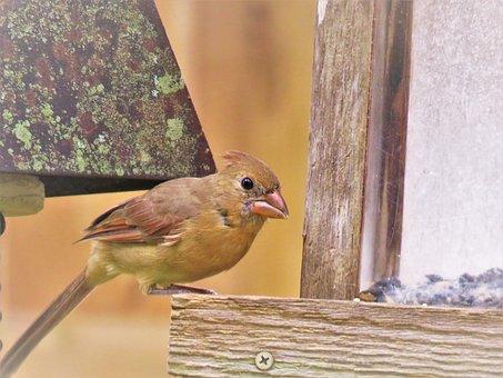 Bird, Wildlife, Close Up, Animal