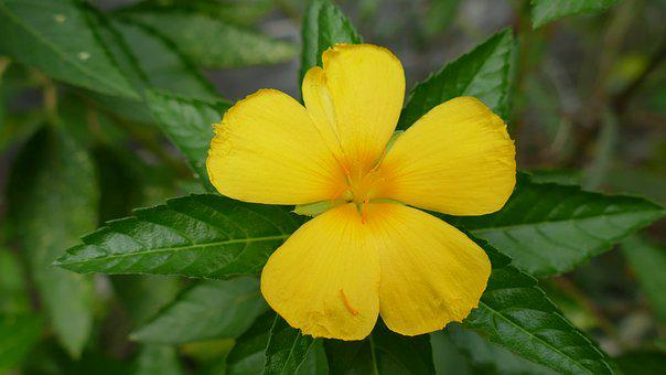 Flower, Việt Nam, Nature, Color, Yellow, Floral