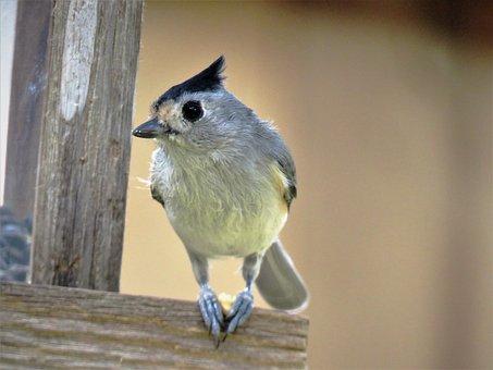 Bird, Cute, Close Up, Wildlife