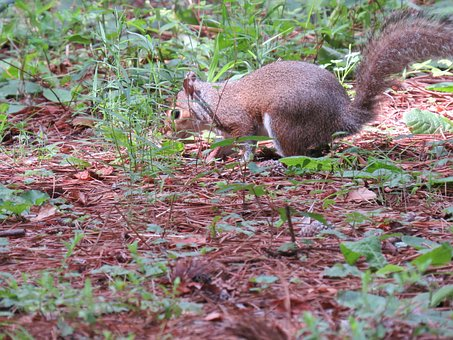 Squirrel, Animal, Summer, United States, Nature, Fauna