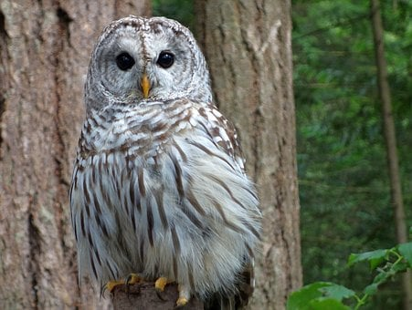Owl, Snowy Owl, Bird, Feather, Nature, White, Animals