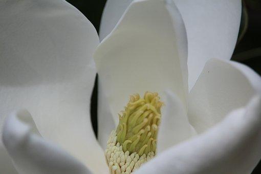 Flower, White, Yellow, Bloom