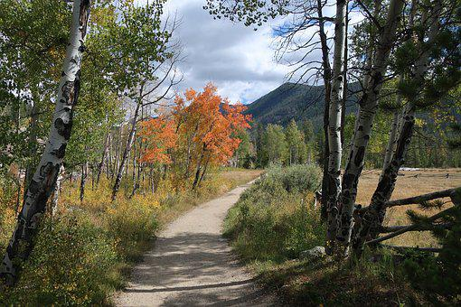Hike, Autumn, Forest, Hiking, Adventure, Outdoor