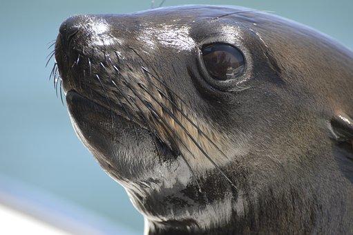 Robbe, Sea, Meeresbewohner, Island, Seal, Ocean, Appear