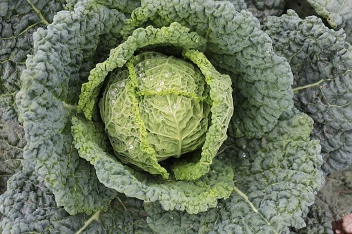 Savoy, Autumn, Harvest, Green, Leaves, Vegetables