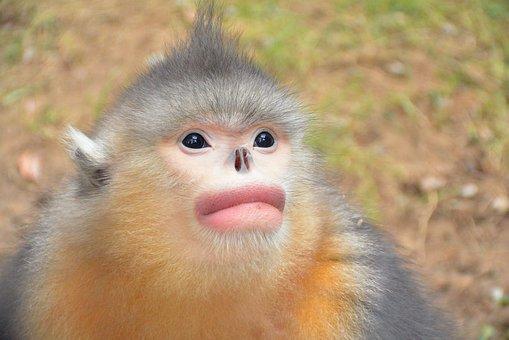 Monkey, Zoo, Animal
