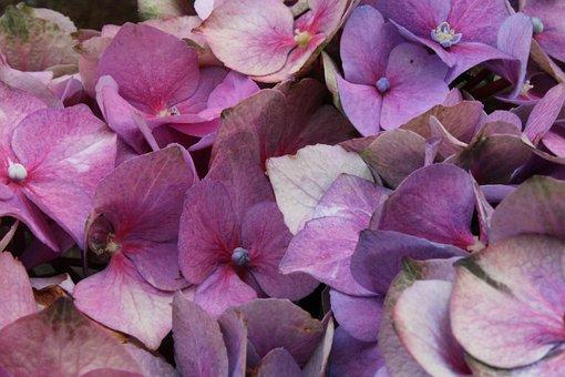 Purple Flowers, Bouquet, Purple, Nature, Floral, Spring